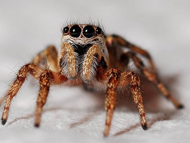 En bild på en spindel